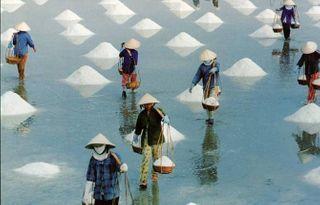 Ruộng muối Sa Quỳnh
