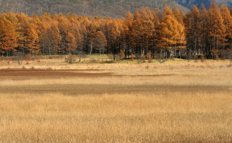 Mùa thu ở Nikko