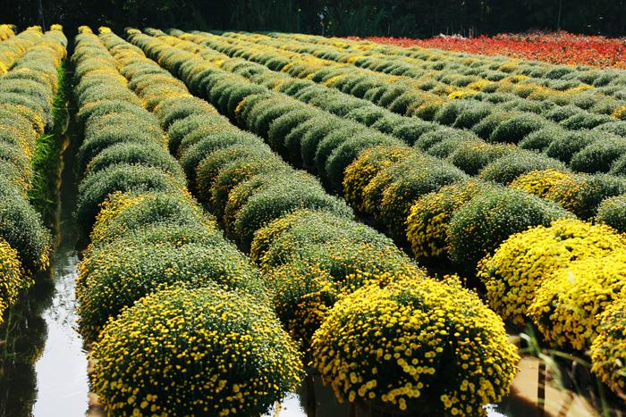 Tan Quy Dong flower garden Dong Thap
