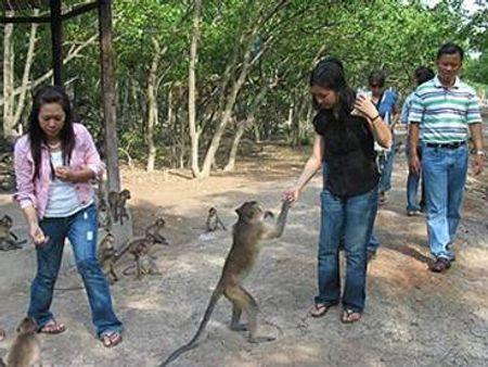 Khách tham quan Đảo Khỉ