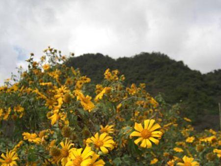 Hoa trên đồi Mộc Châu