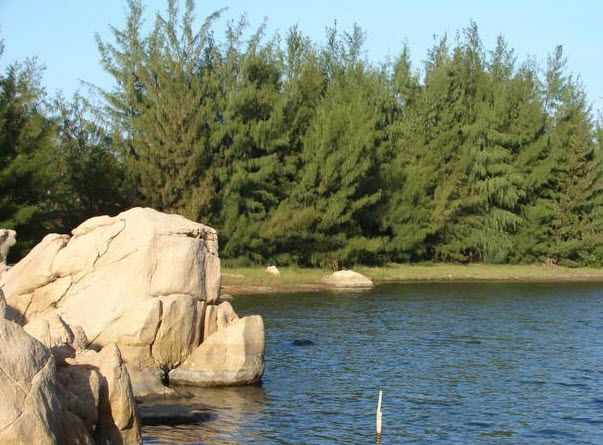Cây xanh nước biếc