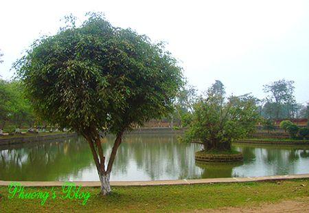 http://du-lich.chudu24.com/f/d/090305/coloa-ok-11.jpg?c=1&w=450