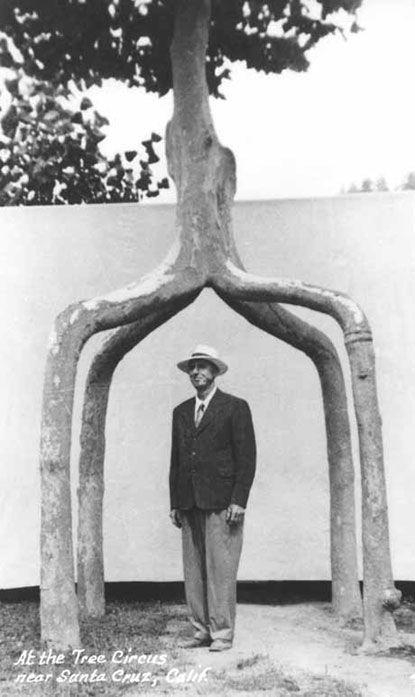 Axel Erlandson và cây đã được nhà triệu phú Michael Bonfante mua vào năm 1985