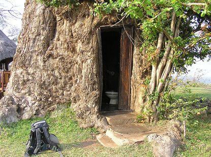 Bao báp tại Kayila Lodge, Zambia bị biến thành WC