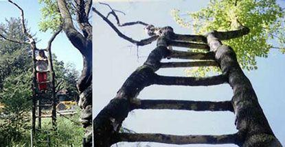 Cây bậc thang