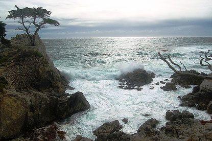 Cây bách chơ vơ trước biển