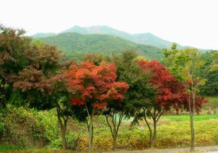 Cảnh đẹp ở Palgongsan