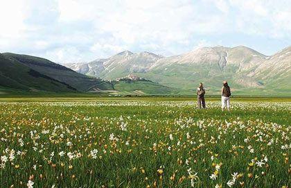 Hoa ngập tràn cao nguyên Piano Grande, Italia, đặc biệt là vào cuối xuân, đầu hè.
