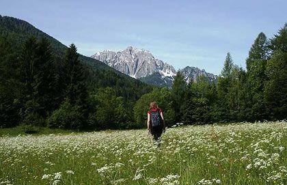 Đồng hoa dại ở Slovenia.