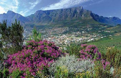 Hoa dại ở Nam Phi đẹp nhất vào tháng 2 hàng năm, là một trong những điểm thu hút du khách tới Mũi Hảo Vọng.