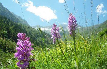 Hoa nở rộ ở vùng Couserans, Pháp.