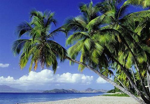 Hàng dừa nghiêng bóng soi gương biển
