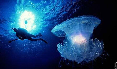 Một con sứa phát sáng