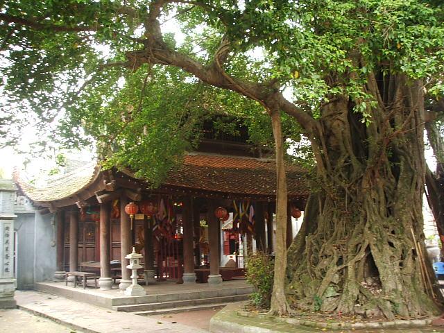Nét thân thương của làng quê Việt. Dscf7721