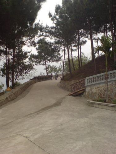 Những con đường quanh thiền viện rợp mát