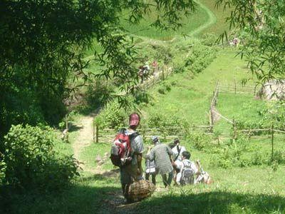 Đi bộ xuyên rừng ở Pù Mát.