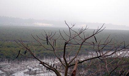 Rừng Đước trong đầm lầy ngập mặn