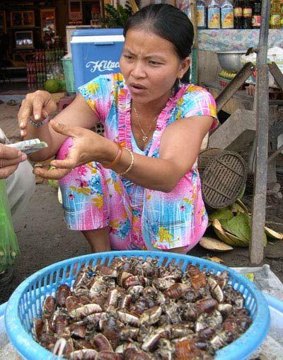 Buôn bán bọ rầy ở chợ biên giới Tịnh Biên (An Giang) trở thành nghề cho thu nhập cao của nhiều nông dân