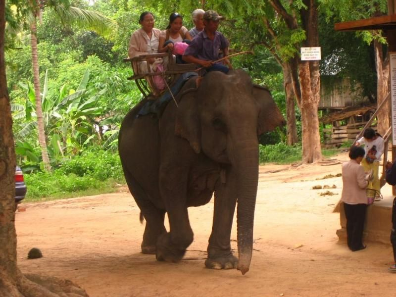 Tận hưởng cái thú được ngồi trên lưng voi