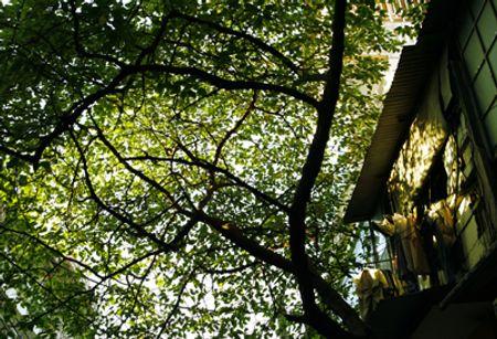 Căn gác nhỏ trong khu phố cổ trong ánh nắng vàng của mùa thu