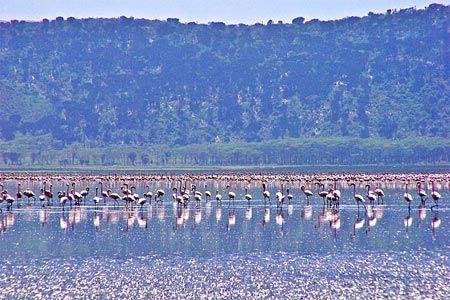 Hồ Nakuru tại Kenya là nơi sinh sống của hàng đàn hồng hạc do có nguồn tảo xanh dồi dào.