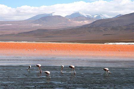 Hồ Colorada tại Bolivia có màu đỏ rực bắt nguồn từ tảo màu và trầm tích.