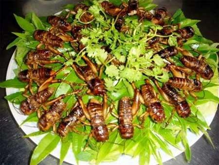 Những món ăn đôc đáo tại Việt Nam - Thách thức lớn đối với du khách quốc tế.