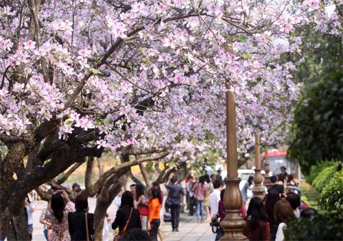 Những khoảng trời hoa đẹp nhất ở Hà Nội 1