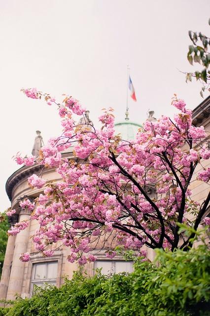 Paris xinh đẹp qua những góc nhìn 5