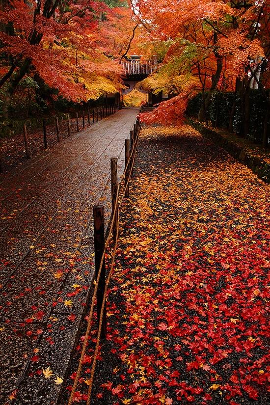 Những quang cảnh đẹp mê mẩn ở Nhật Bản 5