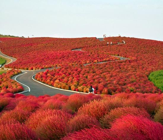Những quang cảnh đẹp mê mẩn ở Nhật Bản 7