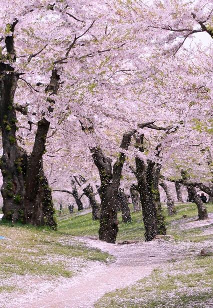 Những quang cảnh đẹp mê mẩn ở Nhật Bản 2