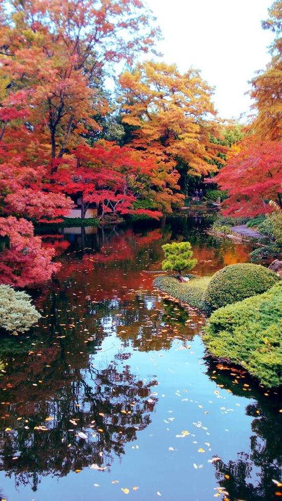 Những quang cảnh đẹp mê mẩn ở Nhật Bản 4