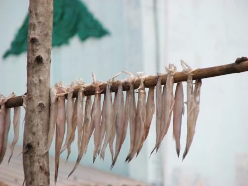 Đặc sản khô cá khoai Sóc Trăng 1
