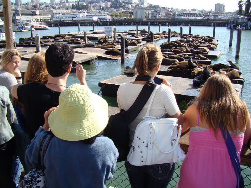 Những con sư tử biển đã trôi đạt vào đây, và sống ở đây từ sau trận sóng thần năm 1990 tại San Francisco.