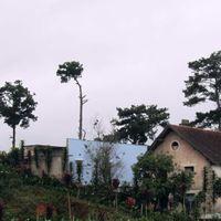 Tổng quan - Villa Du Lac Dalat