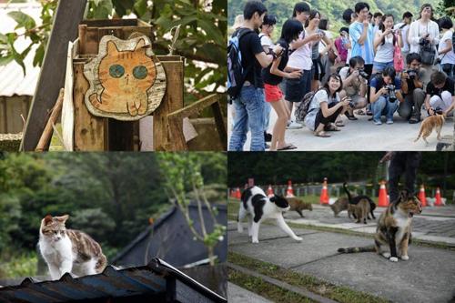 Thị trấn mèo dễ thương ở Đài Loan 1