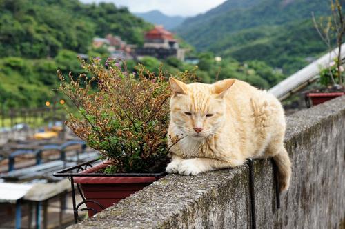 Thị trấn mèo dễ thương ở Đài Loan 4