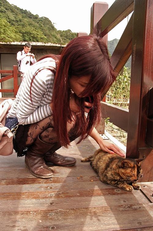 Thị trấn mèo dễ thương ở Đài Loan 7