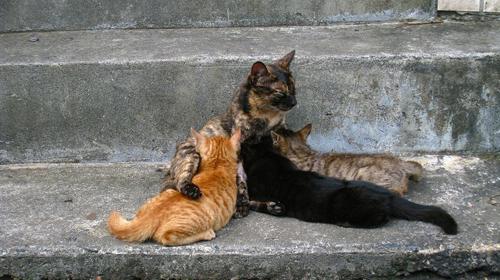 Thị trấn mèo dễ thương ở Đài Loan 8