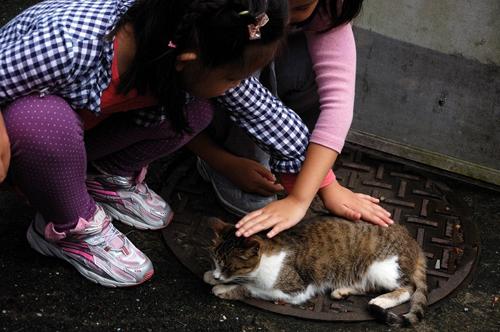 Thị trấn mèo dễ thương ở Đài Loan 10