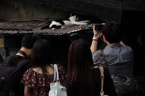 Thị trấn mèo dễ thương ở Đài Loan 14