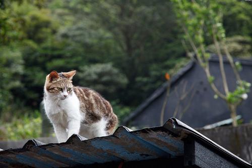 Thị trấn mèo dễ thương ở Đài Loan 21