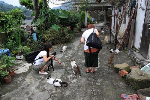 Thị trấn mèo dễ thương ở Đài Loan 22