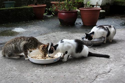 Thị trấn mèo dễ thương ở Đài Loan 19