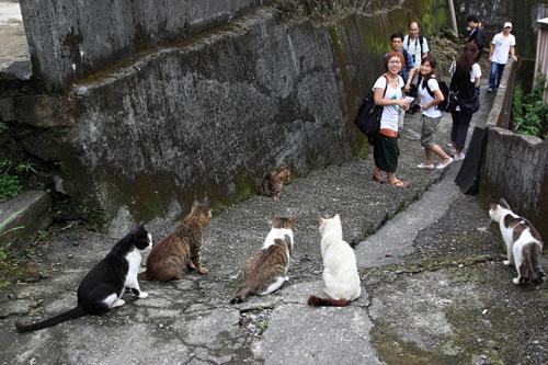 Thị trấn mèo dễ thương ở Đài Loan 20