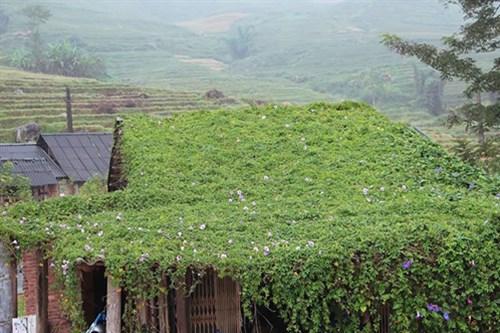 Image result for Trồng cây dây leo trên mái nhà