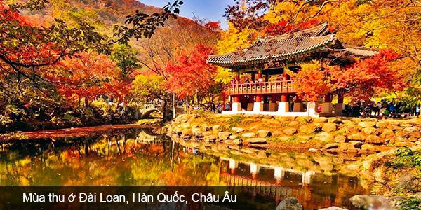 Chạm ngõ mùa thu đẹp không tưởng tại Đài Loan, Hàn Quốc, Châu Âu