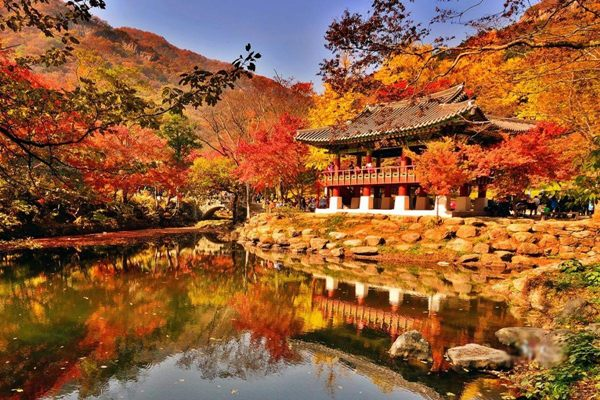 Xuất ngoại sang Hàn - Ngắm thu vàng thay lá